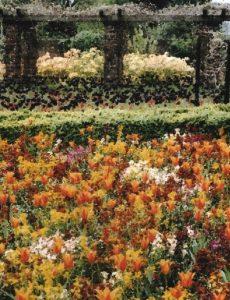 Michael J Duke_Golders Hill Park - In It For The Monet