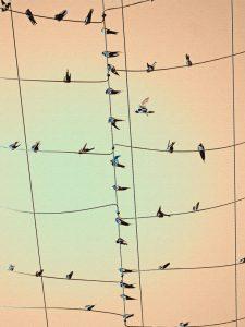 Birds On A Wire - Afula Israel
