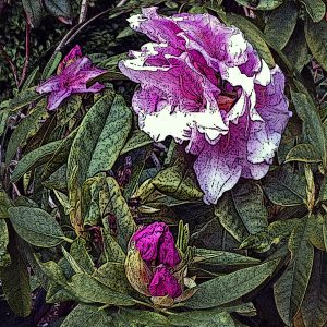 Bursting Into Bloom